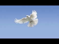 dove_spiritual_gifts